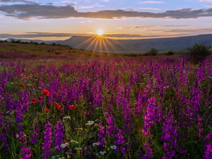 larkspur, Meadow, Mountains, rays of the Sun, papavers, Flowers