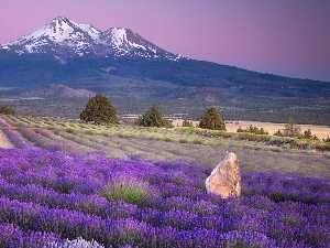 lavender, Mountains, cultivation