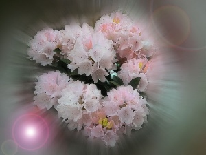 flowers, small bunch, light pink