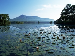 viewes, mountains, lilies, water, water, trees