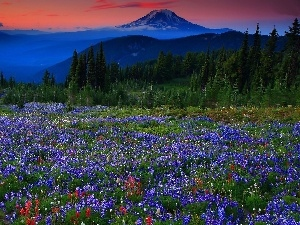 Mountains, Meadow, Lupine, woods