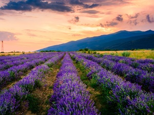 trees, lavender, clouds, Mountains, Field, viewes, Sunrise