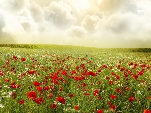 papavers, clouds, Meadow