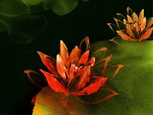 picture, lilies, water