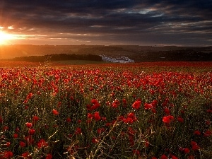 poppy, field, sun, rays, west
