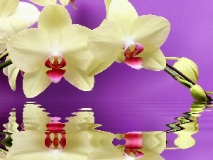 reflection, orchid, water