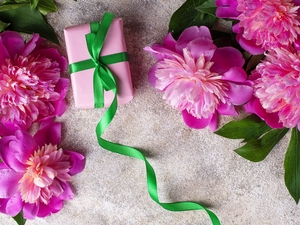 Leaf, Present, background, Green, Grey, Peonies, Pink, ribbon