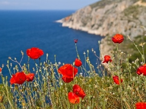 Red, sea, rocks, papavers
