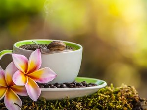 snail, Moss, cup, coffee, Plumeria