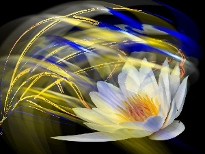 streaks, graphics, water, color, Lily