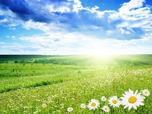 clouds, Meadow, sun, Flowers, rays, woods