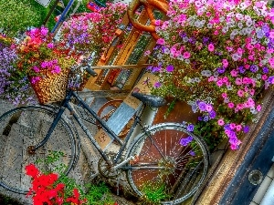 florist, Flowers, Surfinie, Bike