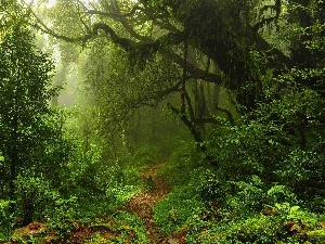 Path, trees, Spring, viewes, fern, forest, magic, Bush