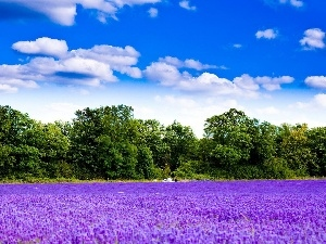 trees, viewes, Field, clouds, lavender