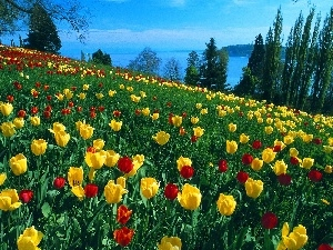 yellow, Field, trees, viewes, red, tulips