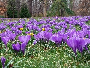 crocuses, trees, viewes, grass