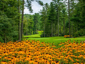 Rudbeckia, Park, trees, viewes, lawns, Flowers