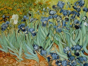 picture, Irises, Vincent Van Gogh