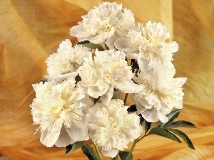 peony, small bunch, white